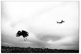 Mándi Emese kiállítása – Repülőtér