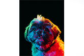 Művészi képek örökbefogadható kutyákról